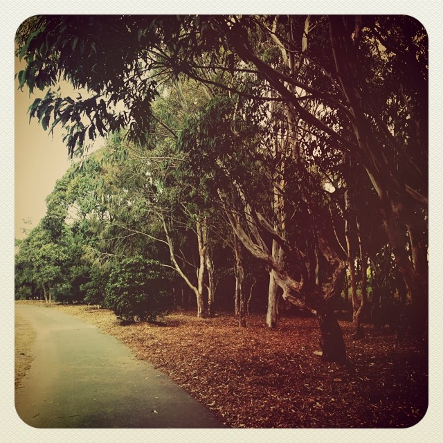 Trees are medicine. #walkingwithangels #sydneypark #stpeters #sydney #nature #treelove