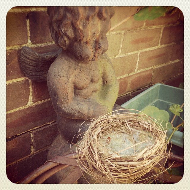 Angels and Nests #natureart #birdlove #family #angels #inspiration #streetblessing #signs #nest #home #spirit