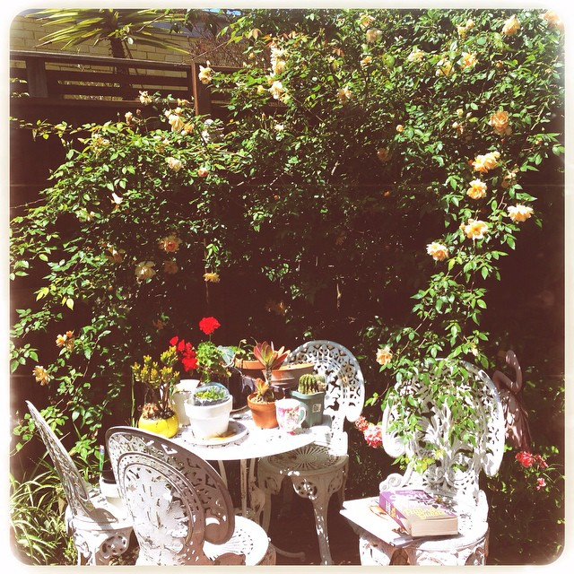 Taking a break from work in my wild garden. Love seeing these roses in bloom again. #natureart #natureismedicine #roses #blessed #innerwest #sydney