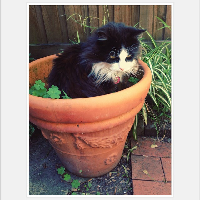I think I grew a Pussycat. #smuchie #bestcat #garden
