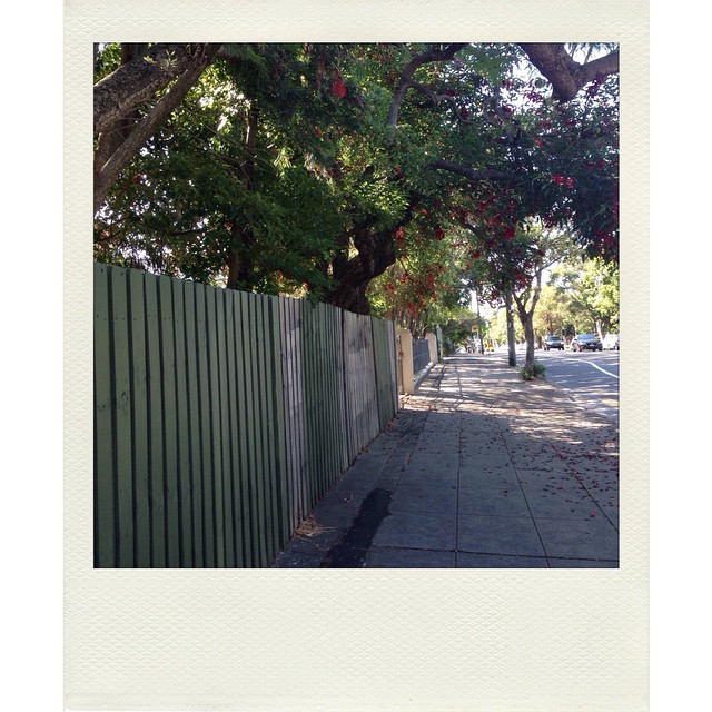 Shady side of the street. #schoolrun #stpeters #innerwest #sydney