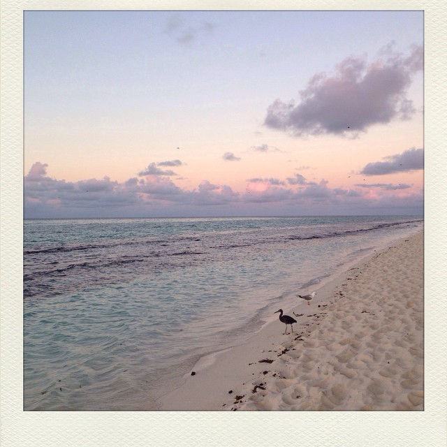 Dawn on Heron Island. The ocean is filled with reef sharks and a carpet of sting-rays. Groups of American research students and backpackers sit watching the sun rise. I do my TM meditation here to the sound of the surf and when I open my eyes the light is pink and I am in paradise. #heronisland #greatbarrierreef #queensland #paradise #transcendentalmeditation