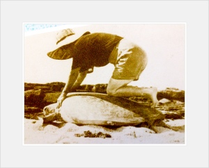 turtle riding in the 50s