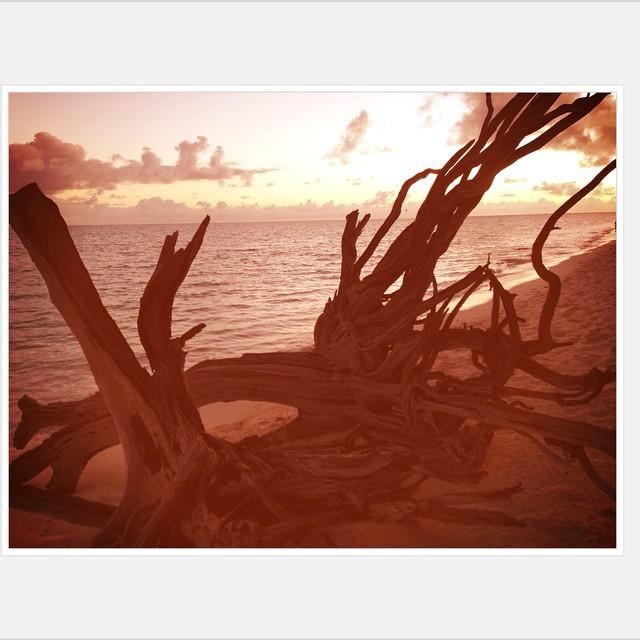 Nature is Art. #heronisland #greatbarrierreef #queensland #australia #paradise