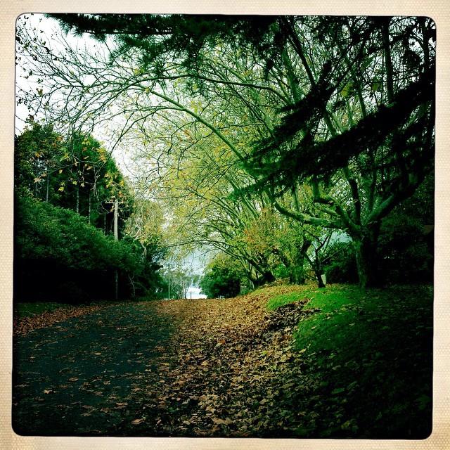 Autumn beauty #familyfundaysunday #stillhouse-hunting #bluemountains #autumn #natureisart #natureismedicine