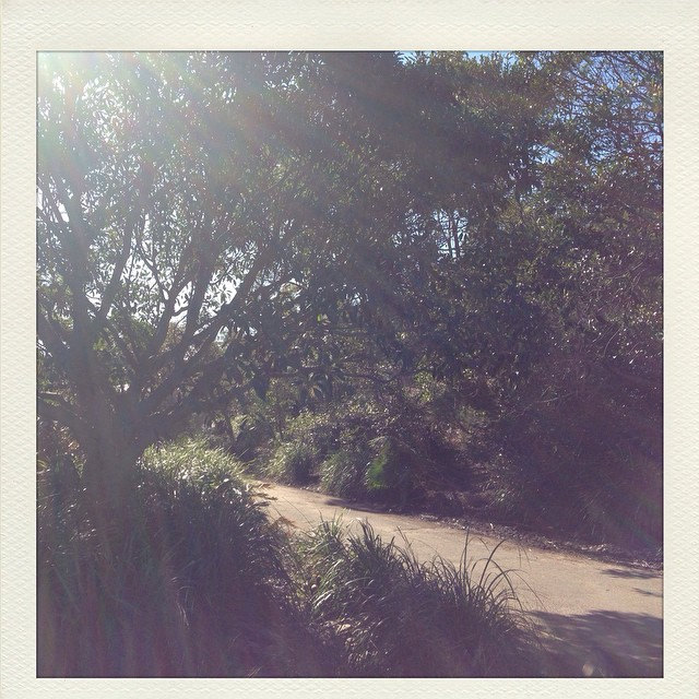 All that I need is here. #walkingwithangels #bush #muse #natureismedicine #natureishealing #sydney  #innerwest #australia