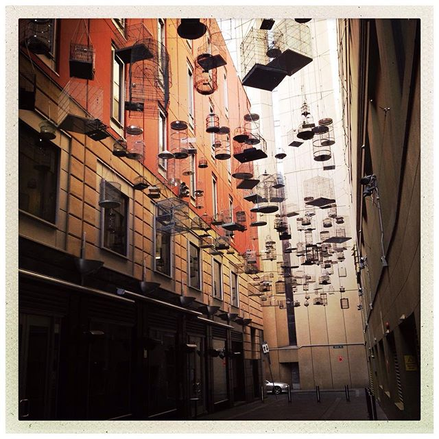Angel Place's uplifting bird installation.